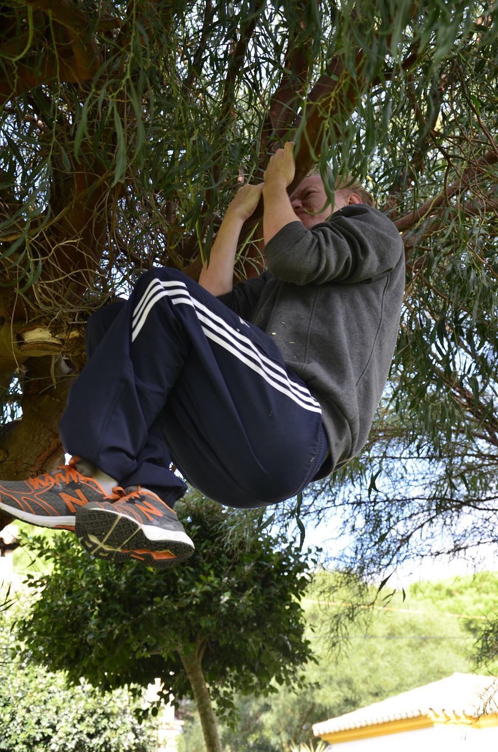 tree pullups