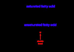 fattyacid